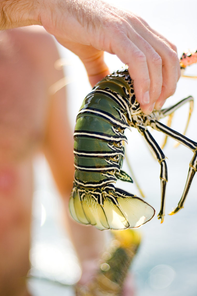 Lobster Tail, Mentawai Islands, Indonesia